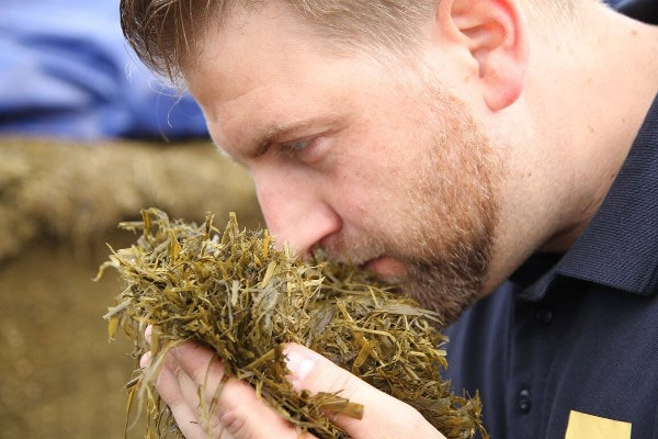 JOSILAC employee, silage test