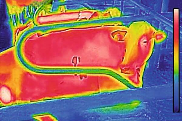 JOSERA cow in thermal imaging camera
