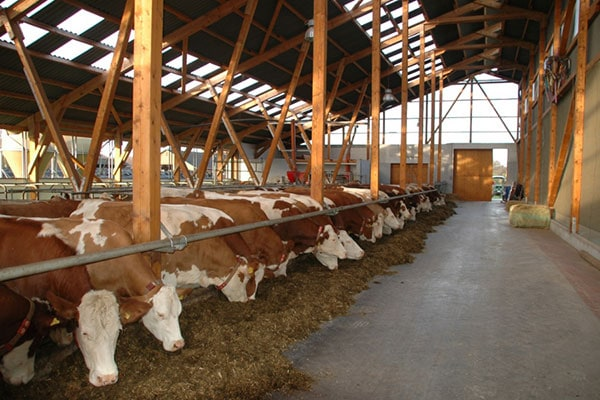 Stall hygiene for cattle – count on the right concept!