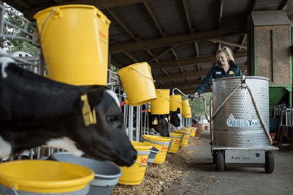 JOSERA feeding calves with milk