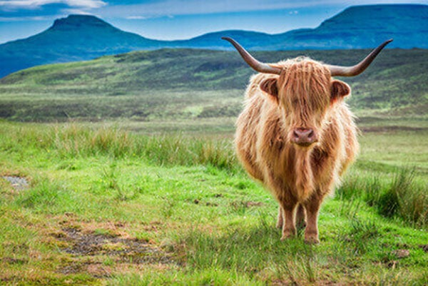 JOSERA Scottish highland cattle