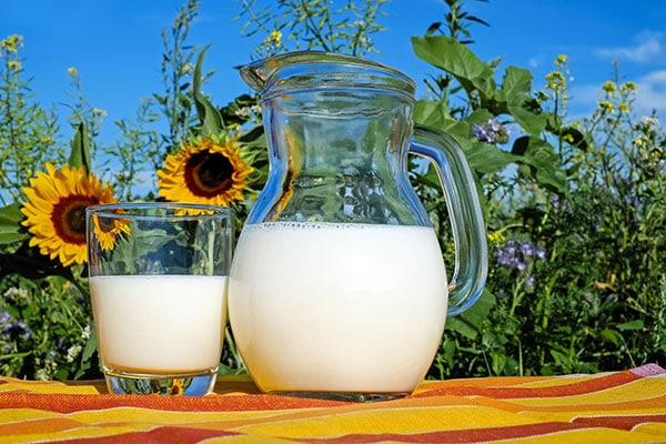 How does feed influence the milk ingredients?