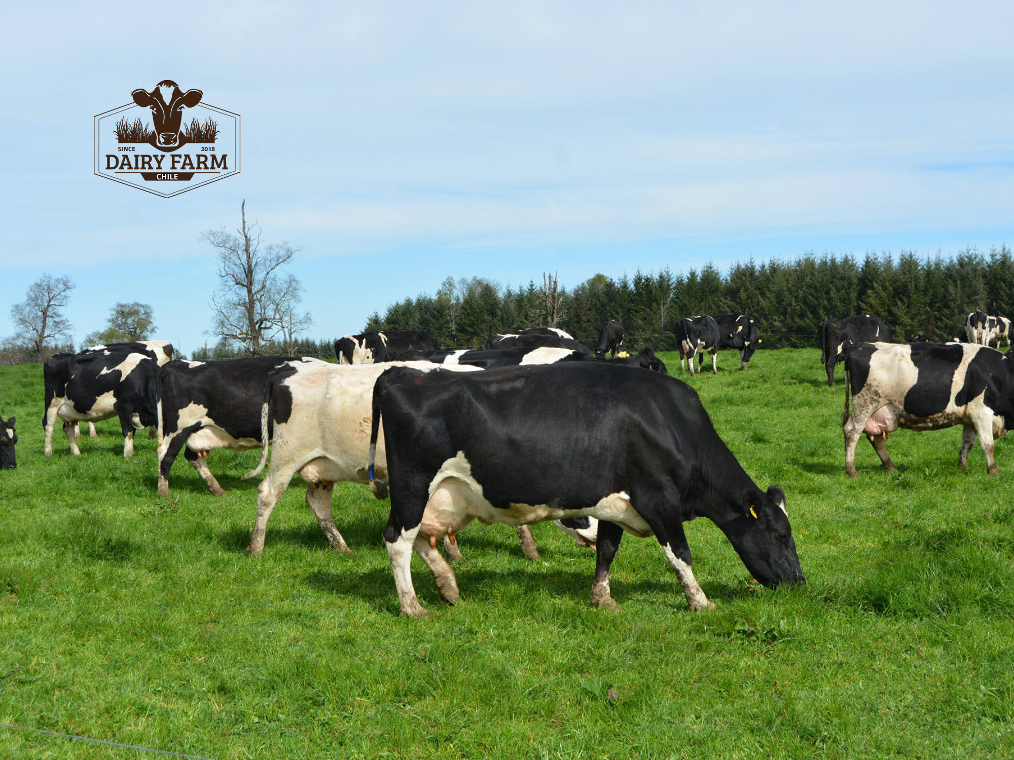 JOSERA DairySafe - lowering the incidence of metritis after calving