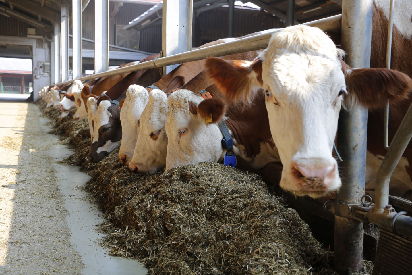 Feed efficiency, another component for economic success