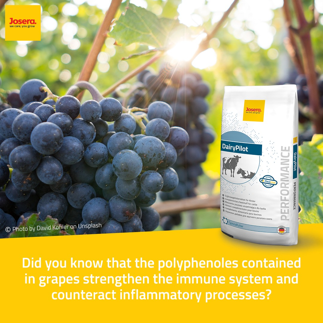 JOSERA mode of action of polyphenols in DairyPilot