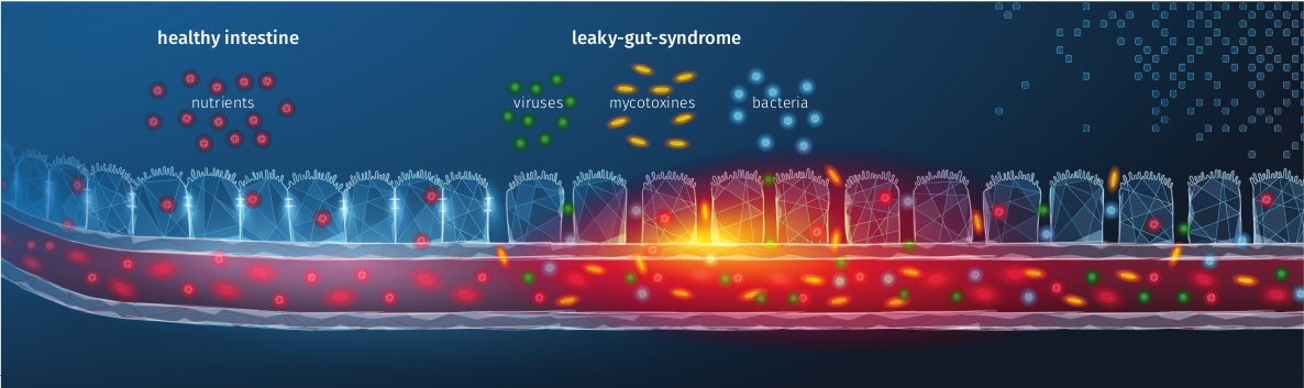 JOSERA graphic shows leaky-gut-syndrome