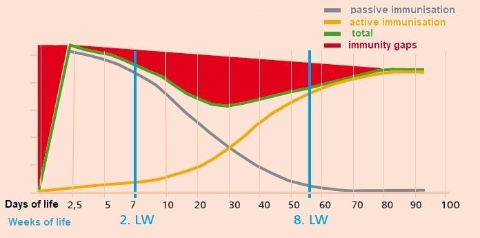 JOSERA graphic shows immunisation in different days of life